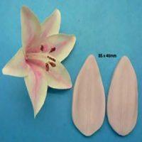 Oriental Lily Veiner